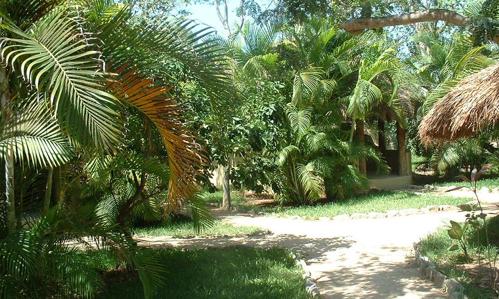 México Playa del Carmen Soléxico